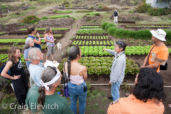 Hawaii Island Homegrown: Food Self-reliance Workshops 2008-09